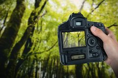 Composite image of cropped hand of photographer holding camera. Cropped hand of photographer holding camera  against view of trees Stock Image
