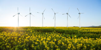 Composite image of digital composite image of wind turbines 3d. Digital composite image of wind turbines  against scenic view of beautiful mustard field 3d Stock Photos
