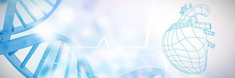 Composite image of digitally generated image of a heart. Digitally generated image of a heart against blue chromosomes on blue background Stock Images