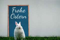 A Composite image of easter bunny Stock Photography