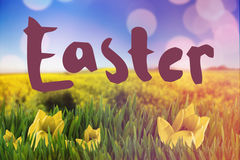 Composite image of easter greeting Royalty Free Stock Photography