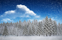 Composite image of fir trees in snowy landscape. With snow falling Royalty Free Stock Images