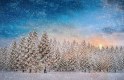 Composite image of fir trees in snowy landscape. With snow falling Royalty Free Stock Image