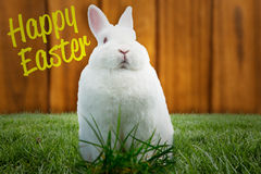 Composite image of fluffy bunny Royalty Free Stock Photos