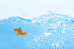 Composite image of goldfish against white background. Goldfish against white background against close up on blue sparkling water Stock Images