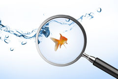 Composite image of goldfish against white screen Royalty Free Stock Image