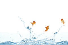 Composite image of goldfish swimming with mouth open against white screen. Goldfish swimming with mouth open against white screen against close up on blue Royalty Free Stock Photos