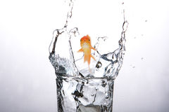 Composite image of goldfish swimming with mouth open against white screen 3d. Goldfish swimming with mouth open against white screen against close-up of water Royalty Free Stock Photos