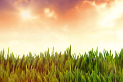 Composite image of grass growing outdoors Stock Image