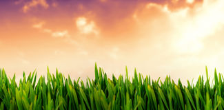 Composite image of grass growing outdoors Royalty Free Stock Images