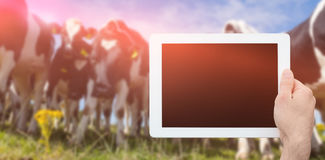 Composite image of hand holding tablet pc. Hand holding tablet pc against low angle view of cows standing on grassy field against sky stock photo