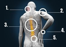 Composite image of human bone structure royalty free illustration