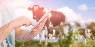 Composite image of man using tablet pc against rural scene. Man using tablet pc against cows in the countryside Royalty Free Stock Photography