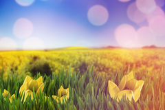 Composite image of picture of a flower Stock Photography