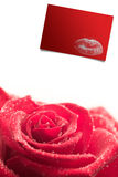 Composite image of pink rose on white background Royalty Free Stock Images