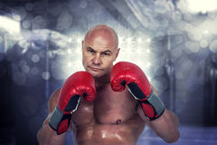 Composite image of portrait of bald boxer in red gloves Royalty Free Stock Photo