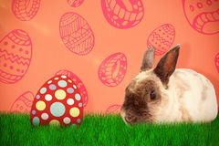 Composite image of portrait of brown rabbit sitting Stock Photo