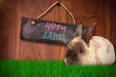 Composite image of portrait of brown rabbit sitting. Portrait of brown rabbit sitting against wood background Royalty Free Stock Photos