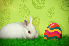 Composite image of portrait of cute white bunny Stock Images
