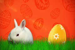 Composite image of rabbit against white background Royalty Free Stock Photo