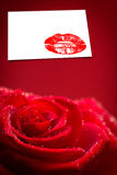 Composite image of red rose with rain drops Stock Photography