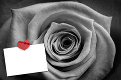 Composite image of rose in black and white Royalty Free Stock Image