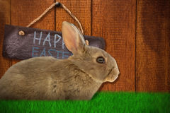 Composite image of side view of cute brown rabbit. Side view of cute brown rabbit  against wooden background Royalty Free Stock Photography