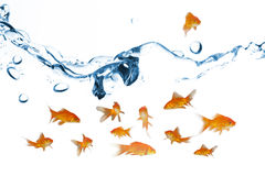 Composite image of side view of fish swimming. Side view of fish swimming against close up on blue sparkling water Royalty Free Stock Photos