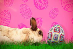 Composite image of side view of rabbit sitting Royalty Free Stock Image