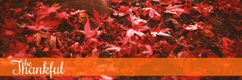 Composite image of thanksgiving greeting text. Thanksgiving greeting text against red maple leaves by trees trunk during autumn Royalty Free Stock Photography