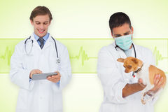 Composite image of vet and smiling doctor Stock Photo