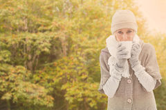 Composite image of woman in warm clothing holding mugs. Woman in warm clothing holding mugs against peaceful autumn scene in forest royalty free stock images