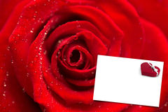 Composite image of zoom of red rose with dew drops Royalty Free Stock Photos
