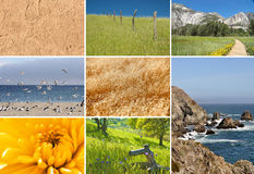 Composite of nature images. In a grid Stock Photography