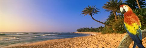 Composite panoramic image of a colorful parrot and coastline in Hawaii Royalty Free Stock Images