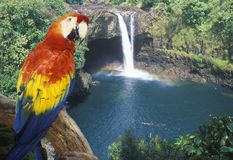 Composite panoramic image of a colorful parrot and waterfall in Hawaii Stock Image