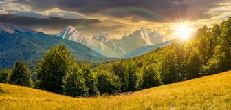 Composite summer landscape in mountains at sunset. Composite summer landscape in mountains under the rainbow at sunset. perfect countryside scenery with beech Stock Photography
