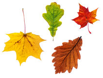 Composite  of various autumn leaves Royalty Free Stock Images