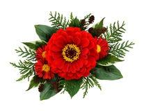 Composithion di Natale con i fiori di zinnia immagini stock