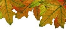 Compositiom con i fogli di autunno Immagini Stock Libere da Diritti