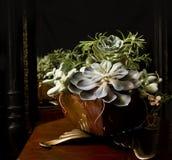 Composition étonnante des fleurs succulentes images stock