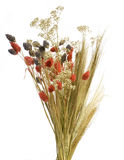 Composition. From flower and ears of wheat stock photo