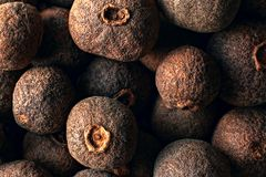 Composition of allspice dried berries royalty free stock image