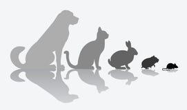 Composition animale sur le blanc Images libres de droits