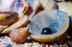 Composition for aquarium Royalty Free Stock Photos