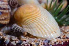 Composition for aquarium Stock Images