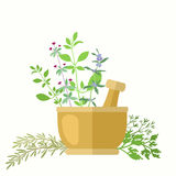 Composition With Aromatic Herbs And Mortar Stock Image