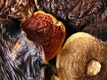Composition aromatique de champignons de couche photographie stock