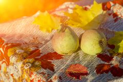 Composition with assorted raw organic fruits and vegetables. royalty free stock photo