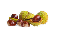 Composition of autumn chestnuts and leaves Royalty Free Stock Photo